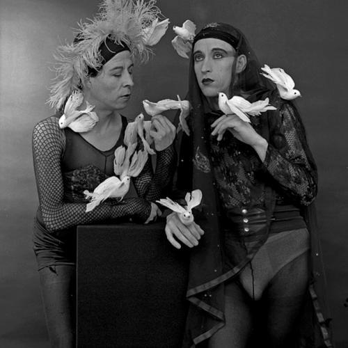 Instalamos pajaritos como palomas con alambritos